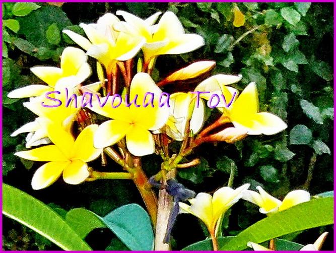 ShTo071115.jpg