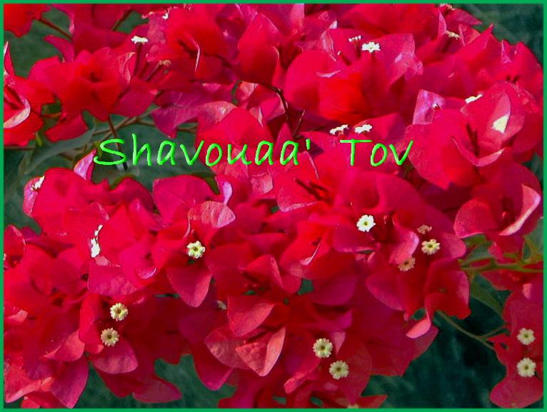 ShTo020116.jpg