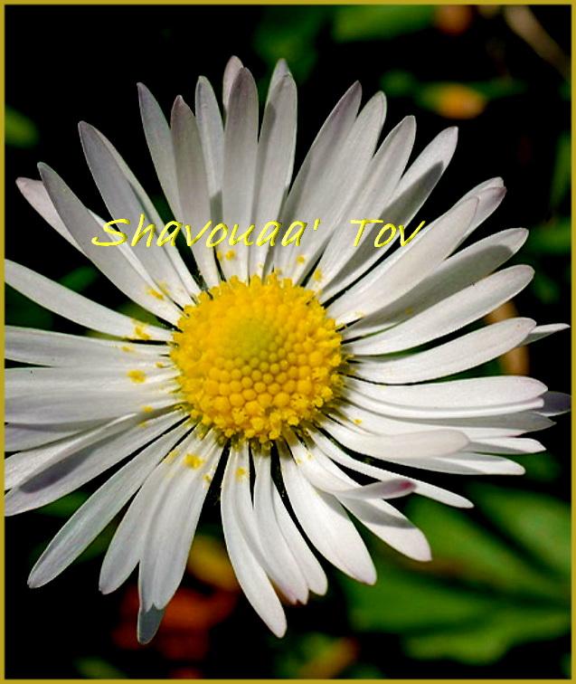 ShTo130216.jpg