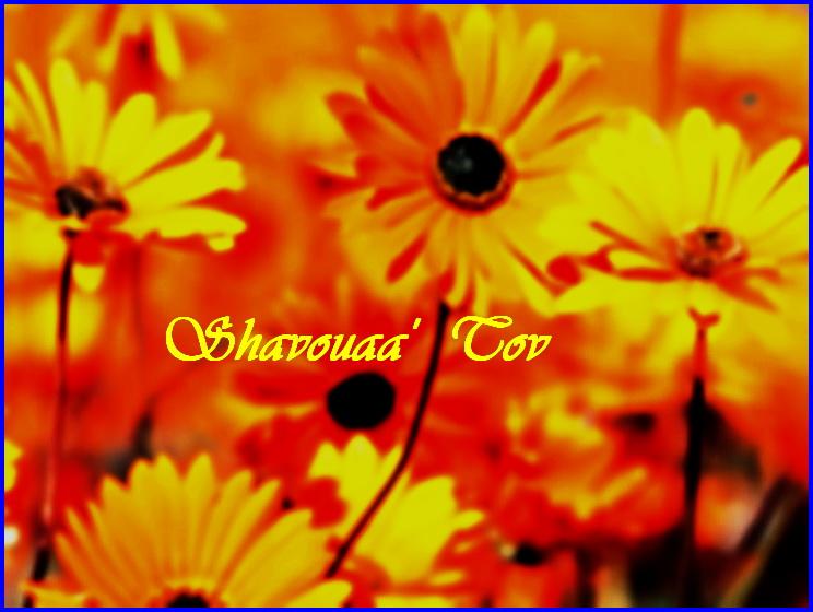 ShTo100916.jpg