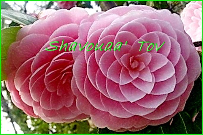 ShTo121116.jpg