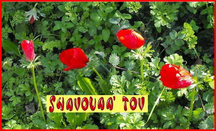 ShTov040317.jpg