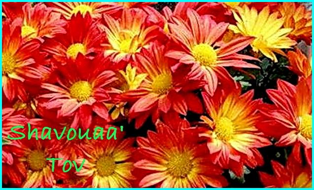 ShTo260518.jpg
