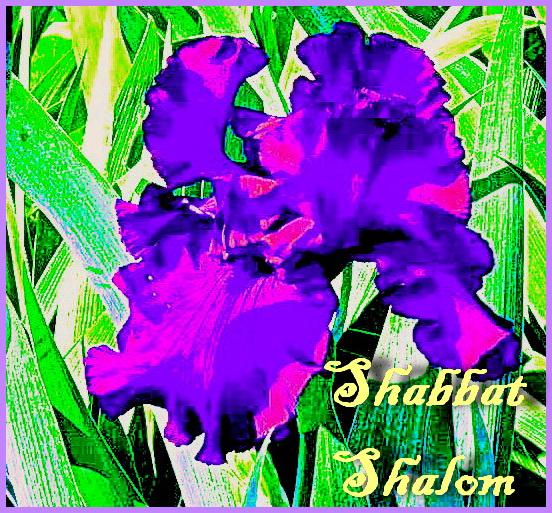 ShSh010618.jpg