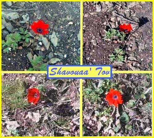ShTov190108.JPG